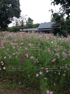 花畑 - No.251838