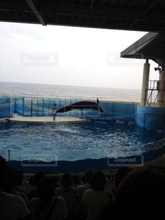 イルカの写真・画像素材[251881]