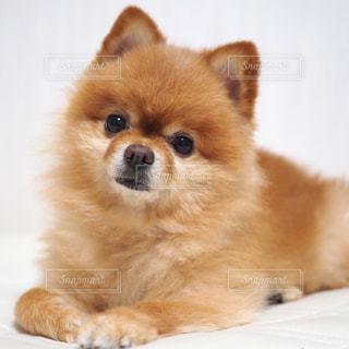 犬 - No.251030
