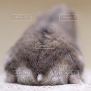 動物の写真・画像素材[251033]