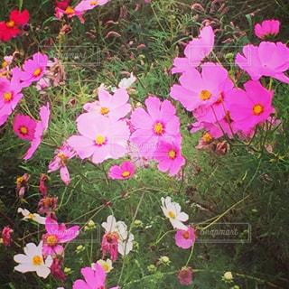 花の写真・画像素材[253065]
