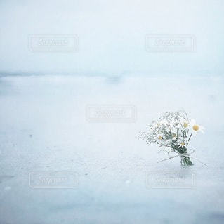 自然の写真・画像素材[6369]