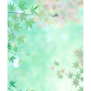 自然の写真・画像素材[6362]