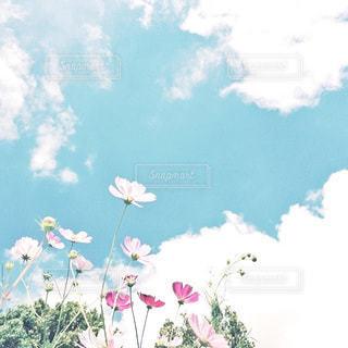 自然の写真・画像素材[6351]