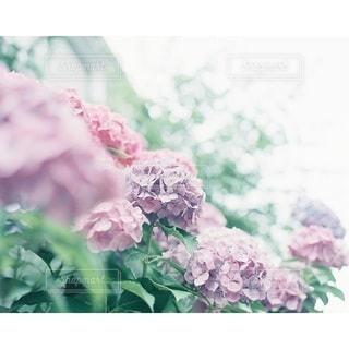 自然の写真・画像素材[6344]
