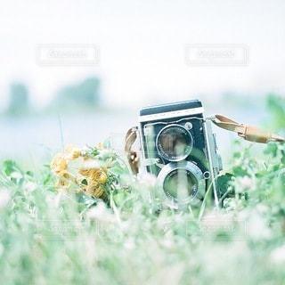 自然の写真・画像素材[6336]