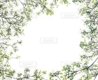 自然の写真・画像素材[6311]