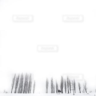 自然の写真・画像素材[6306]