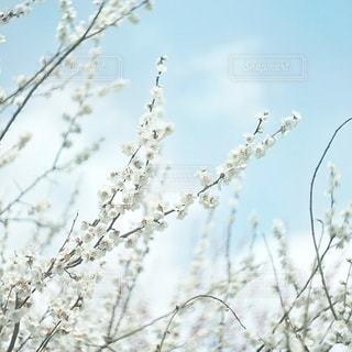 自然の写真・画像素材[6304]