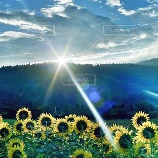 自然の写真・画像素材[6293]