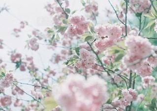 自然の写真・画像素材[6285]