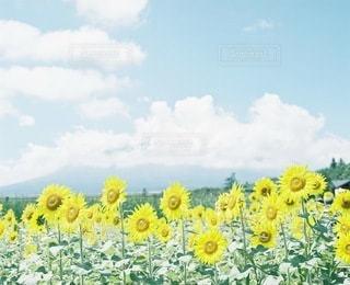 自然の写真・画像素材[6278]