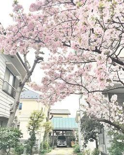 花の写真・画像素材[11010]