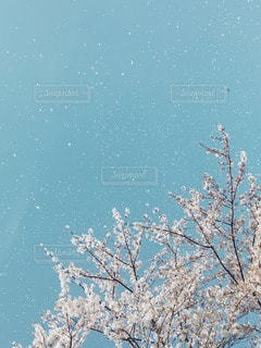 自然の写真・画像素材[11011]