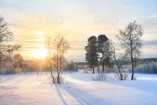 冬の写真・画像素材[331115]