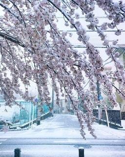 雪に覆われた列車の写真・画像素材[3363113]