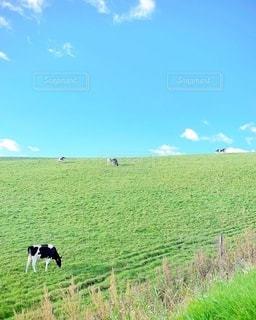 緑豊かな畑の上に立つ牛の群れの写真・画像素材[3372458]