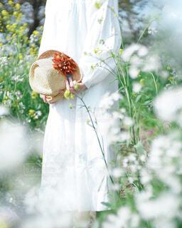 花のクローズアップの写真・画像素材[4390744]