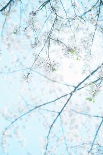 木の枝に止まっている鳥の写真・画像素材[4390751]