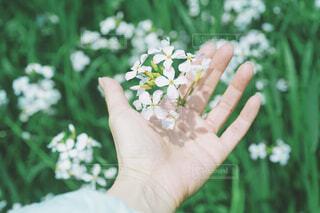 花を持つ手の写真・画像素材[4390757]
