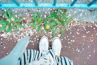 庭の青いベンチの写真・画像素材[4411909]