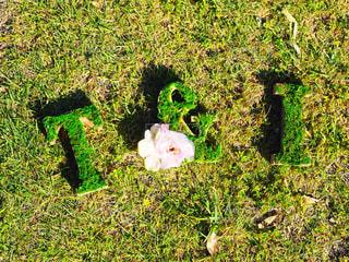 春の写真・画像素材[532721]
