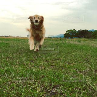 犬の写真・画像素材[251430]