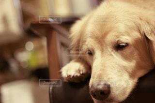 No.251431 犬