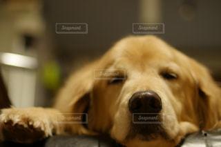 犬 - No.251432