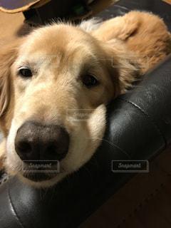 犬の写真・画像素材[251434]