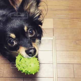 犬の写真・画像素材[253149]