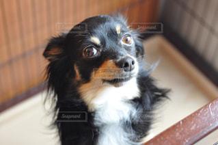 犬の写真・画像素材[260806]