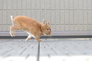 動物の写真・画像素材[272980]