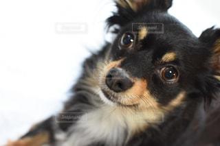 No.354471 犬