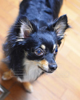 犬の写真・画像素材[569327]