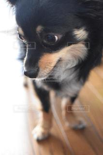 犬 - No.569328