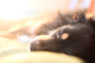 近くに犬のアップの写真・画像素材[745192]