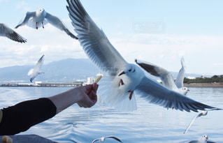 水の体の上を飛んでいる鳥 - No.866526
