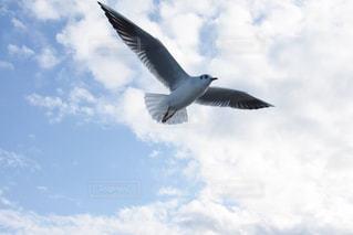 曇りの日に空を飛んでいる鳥 - No.866528