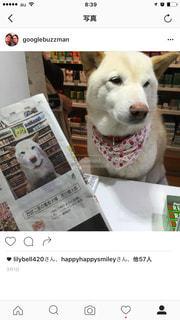 No.251956 犬