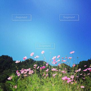 自然の写真・画像素材[251709]