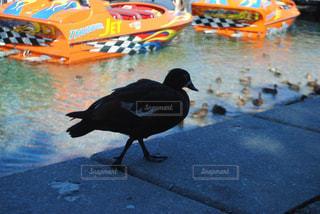 野鳥の写真・画像素材[251677]