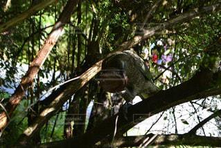 野生動物の写真・画像素材[251681]