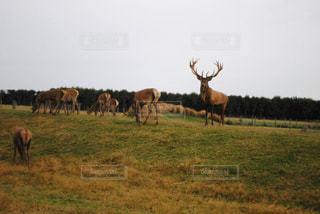 野生動物の写真・画像素材[251682]