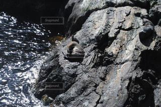 野生動物の写真・画像素材[251683]