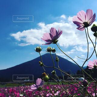 花畑 - No.253482