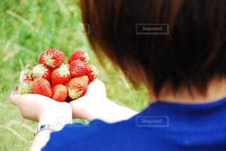 女性,1人,食べ物,公園,春,赤,いちご,苺,フルーツ,果物,red,fruit,レッド,strawberry,ストロベリー,イチゴ