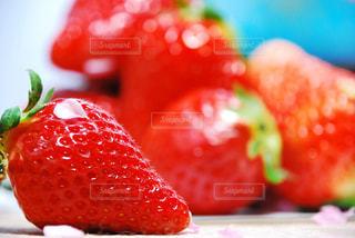 食べ物の写真・画像素材[253516]
