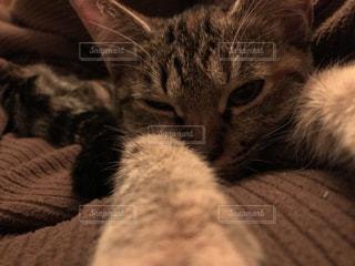 猫 - No.257976