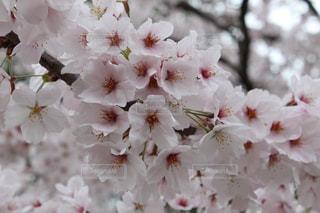 花の写真・画像素材[447104]
